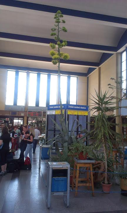 01379c8bdc574 Vo Zvolene na železničnej stanici ro - Katalóg firiem | moje Topolcany