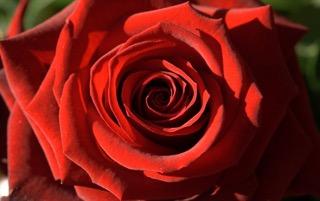 6b4b36315901a Privoňajte k ruži - Katalóg firiem | moje Topolcany
